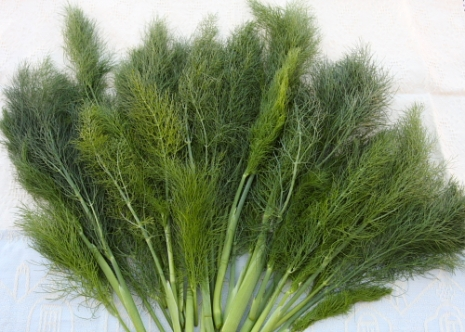 Wild-fennel-fronds